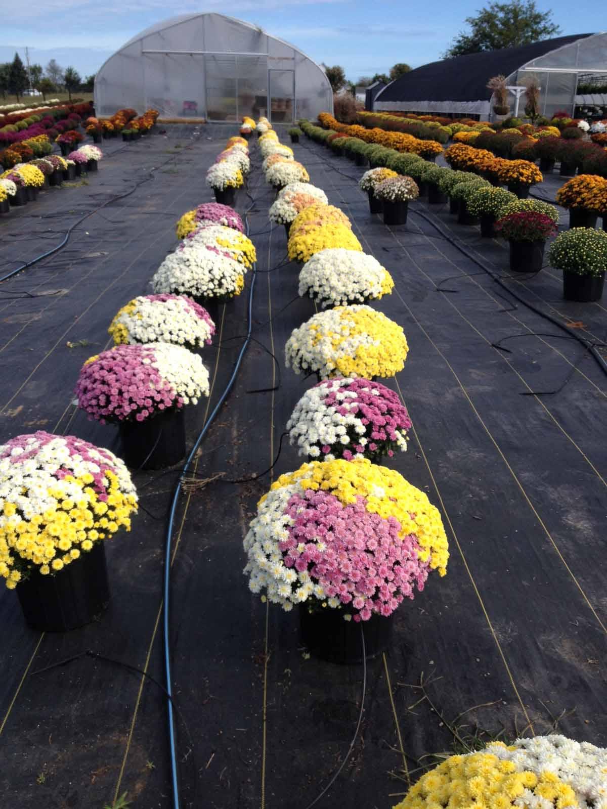 pots and petals franklin kentucky